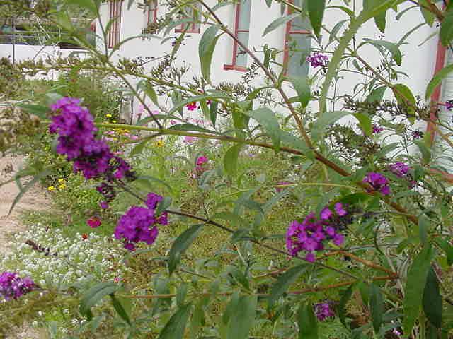Kitty Coopers Garden September 2002