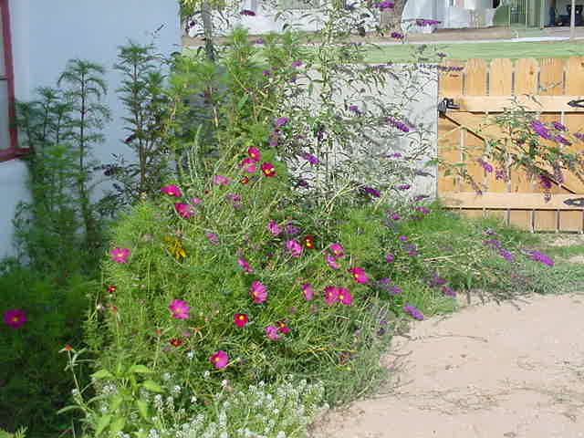 Kitty Coopers Garden